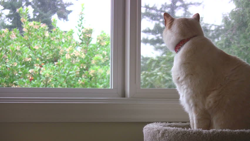 A cat looking out a window on a rainy day