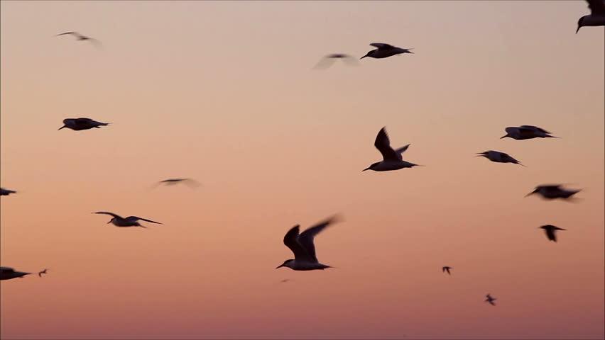 Young birds fly movie soundtrack naked girls cruise