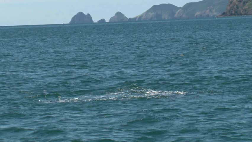 Bay of Islands, New Zealand. September 2011. Dolphin videoed in slow motion jumping out of the water. | Shutterstock HD Video #2752838