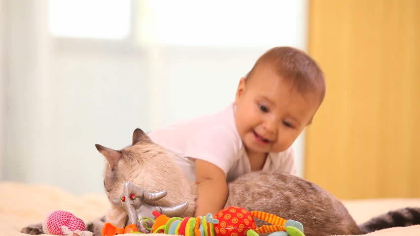 Adorable baby boy with cat sitting on the bed #2763770