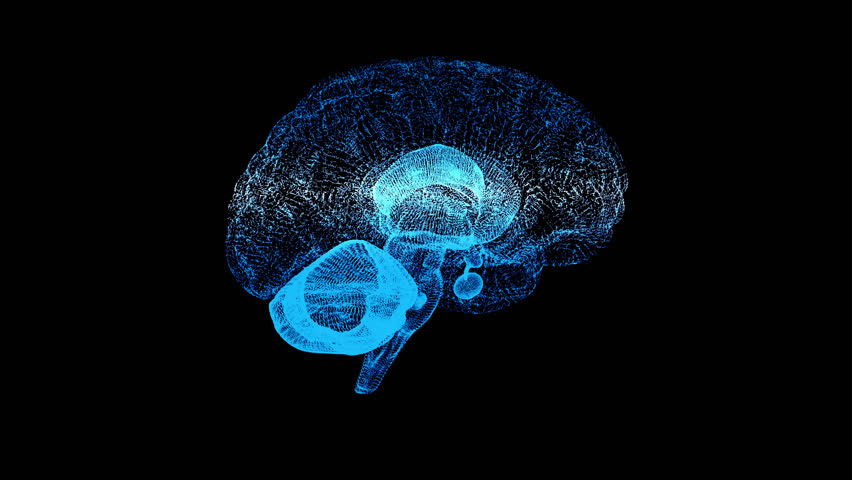 3d animation graphic design of brain and brain stem in alpha background. Brain showing and spinning with mri scan in creativity model and health concept with wire frames alpha transparent background