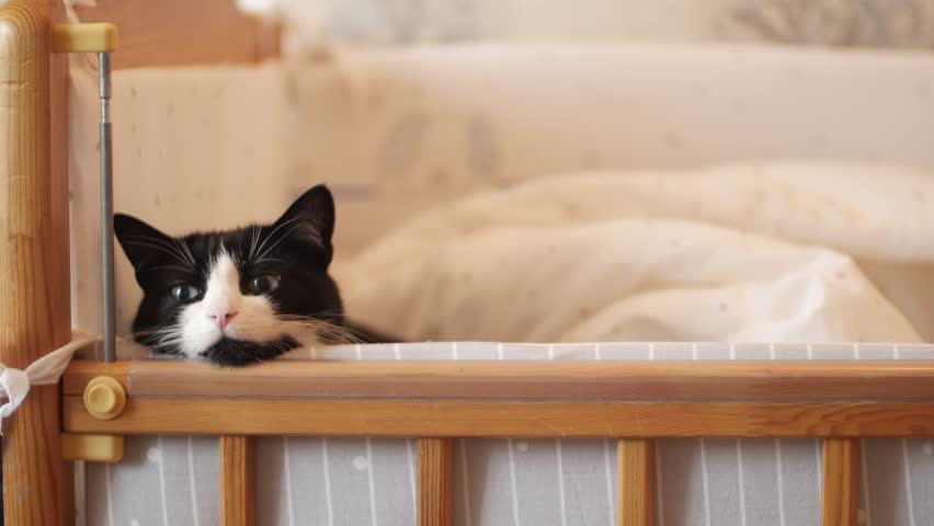 The Cat Lies In A Stock Footage Video 100 Royalty Free 27892408