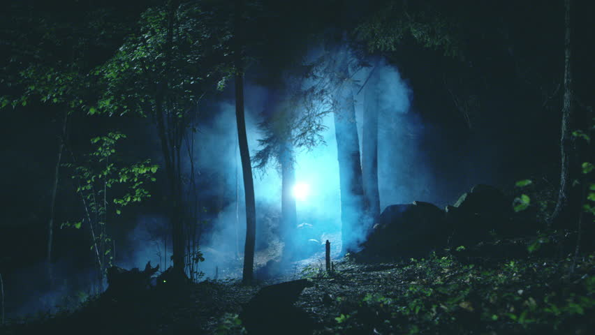 Mysterious and scary forest with mist and light at night | Shutterstock HD Video #28290238