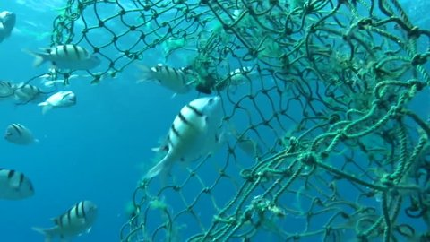 2010s: Underwater view of a broken net which could ensnare and trap marine animals.