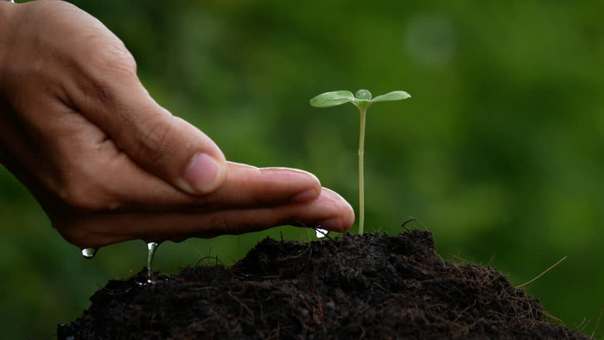 Plant Growing On Soil With Stock Footage Video 100