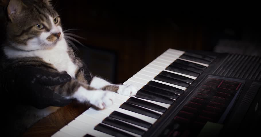 A funny cat playing a piano, keyboard,  or organ.	 #28580878