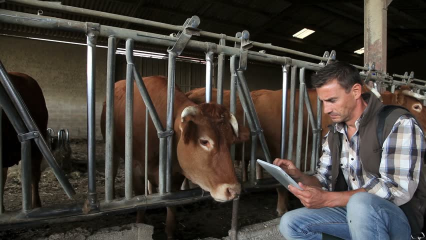 Header of cow barn