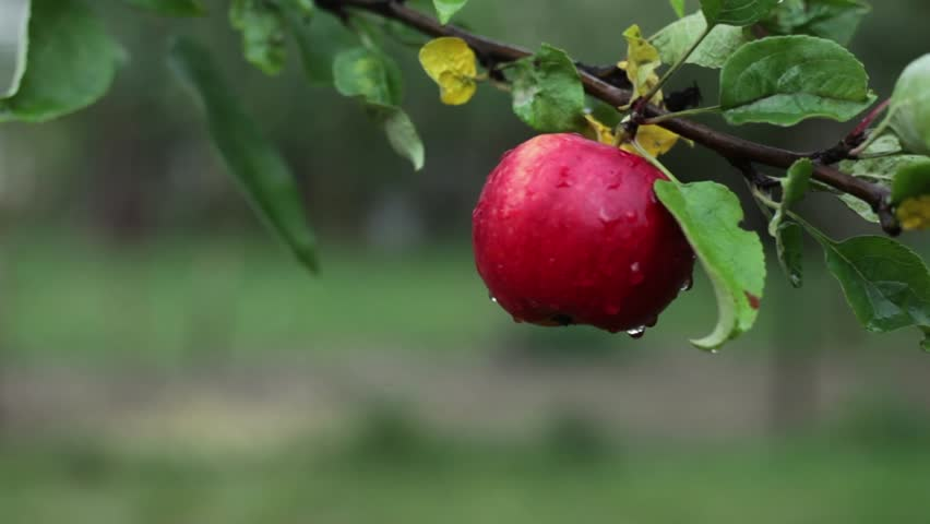 appletree stock footage video shutterstock