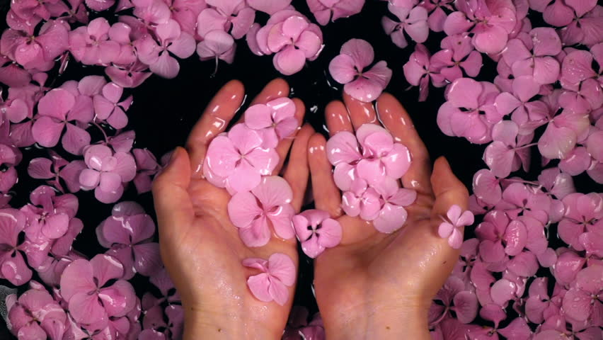 Woman enjoying hands care bath with hydrangea flowers. Slow motion. Beautiful lifestyle composition with top view. Shooting with high-speed camera. | Shutterstock HD Video #28965268
