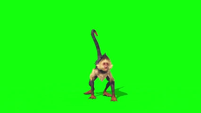 Monkey Attacks Green Screen 3D Rendering Animation