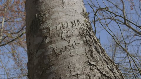 Love Initials Carved Into Tree In Forest with Heart