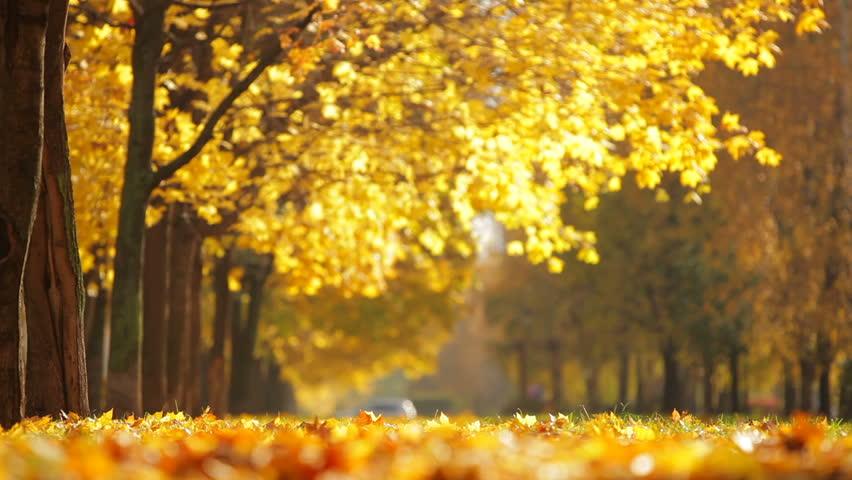Autumn in Skopje City Park | OLYMPUS DIGITAL CAMERA | Flickr