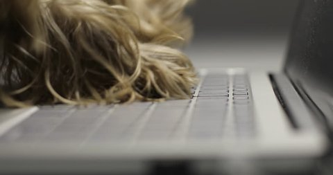 Dog is typing text on a laptop.