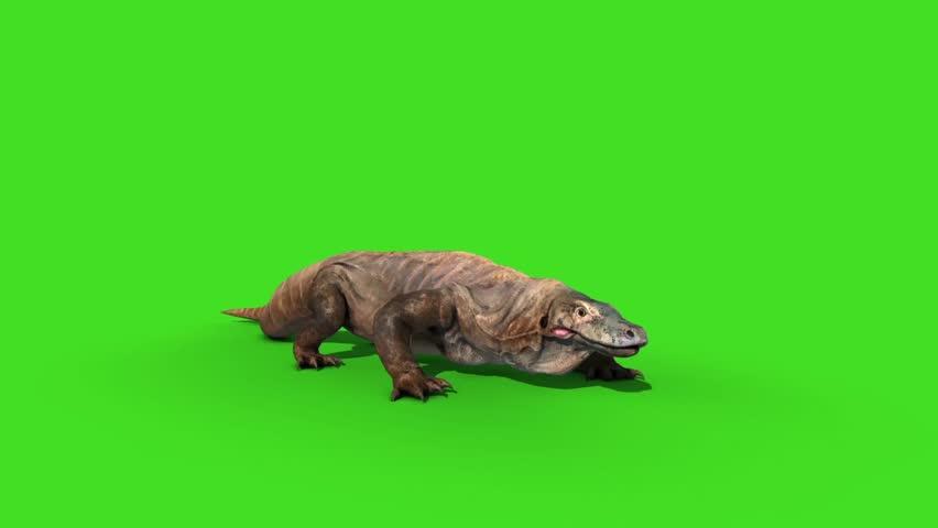 Komodo Dragon Varanus Komodoensis Lizard Attacks Green Screen Animation 3D