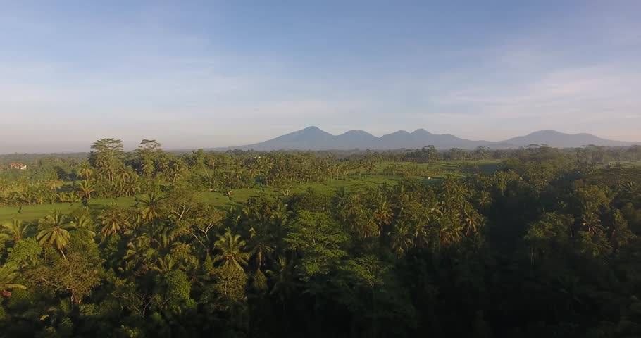Aerial view of the jungle at dawn | Shutterstock HD Video #29356678