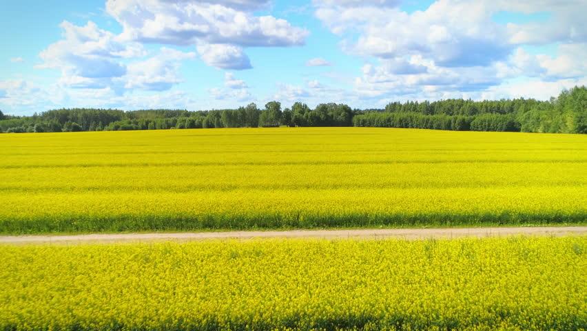 Yellow rapeseed aerial shot