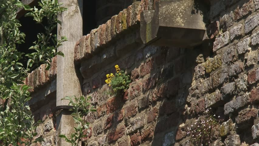 ZUTPHEN, THE NETHERLANDS - APRIL 2011: plants grow in 14th century city wall  zoom out to gates in wall
