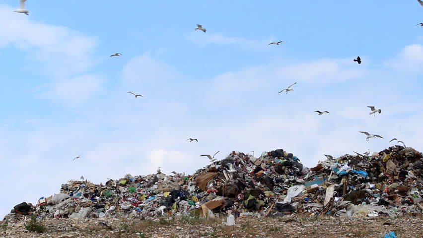 Seagulls, sky and garbage  Description: Seagulls on landfill