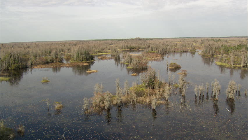 Colours In The Okefenokee Swamp