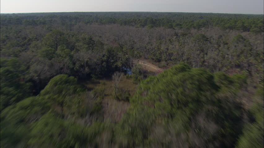 Low Over St Marks National Wildlife Refuge   Shutterstock HD Video #29662108