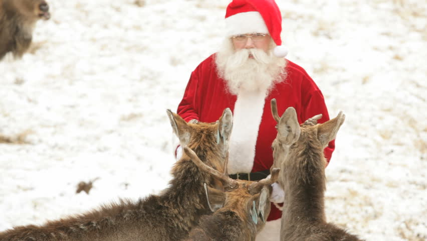Zoom out of Santa Claus caressing his pets and treating them with bread