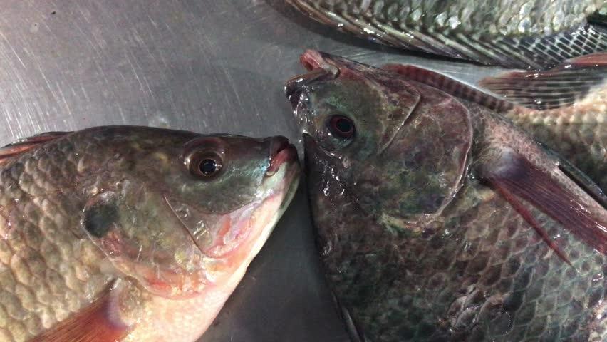 fish alive tilapia, fresh nile tilapia in night market fresh street food