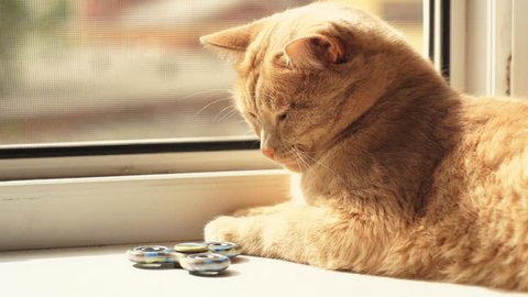 A red cat lays on the windowsill and watches rotating the fidget spinner, then the pet stops the toy with its paw.