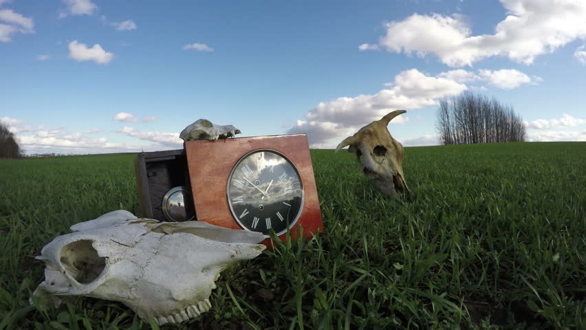Cow and horse skulls on wheat field and ancient clock, time lapse 4K