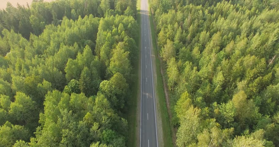 Flight over the trees in forest, view of the road near the forest, car ride on the road, view from height.  #30051838