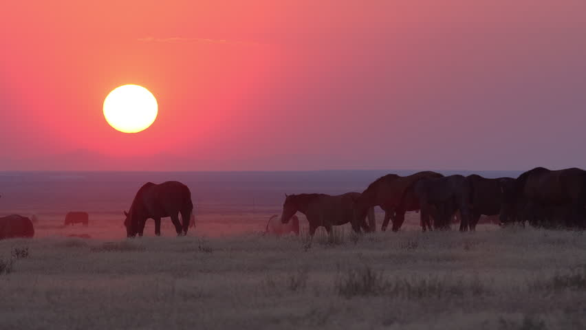 Heard of wild horses grazing as the sun sets in a smokey red landscape. | Shutterstock HD Video #30103828