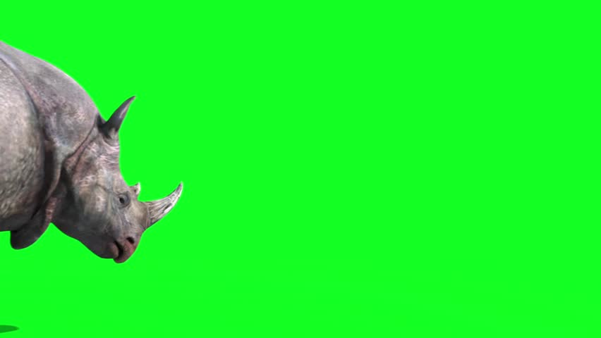 Rhinoceros Walks Back Green Screen 3D Rendering Animation Animals #30127348