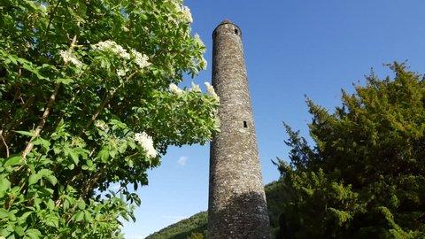 The elderflower growing near a round tower at Glendalough has medicinal merits.
