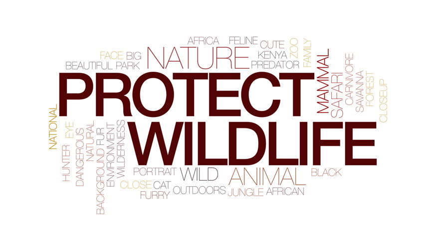 Protect wildlife animated word cloud, text design animation. Kinetic typography. | Shutterstock HD Video #30239368