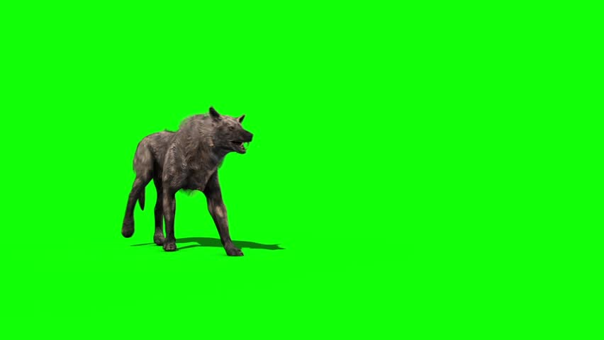 Wolf Walks Green Screen 3D Rendering Animation | Shutterstock HD Video #30246247