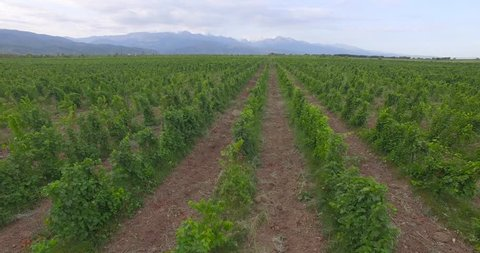 vineyards from a bird's-eye view