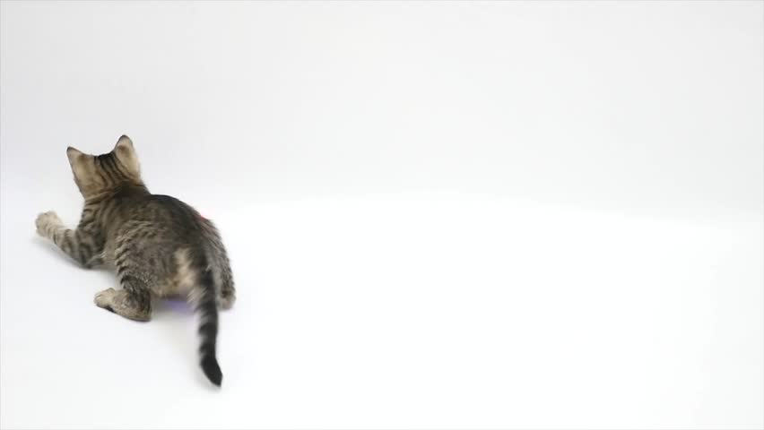 Cat playing against a white background,slow motion.