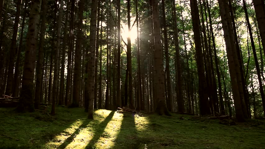 Insects flying in the forest with beautiful sunlight beams.  | Shutterstock HD Video #30326758
