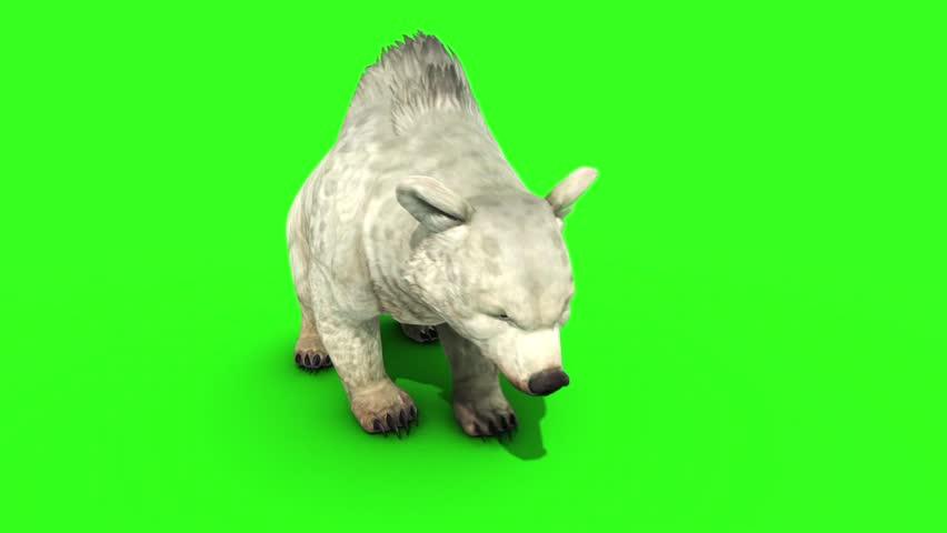 White Bear Green Screen 3D Rendering Animation #30392428