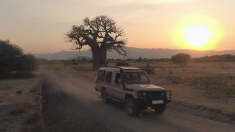 AERIAL, CLOSE UP: Flying towards game drive safari jeep driving maintenance workers and guides past mighty old baobab tree in beautiful arid African savannah plain field at stunning golden sunset