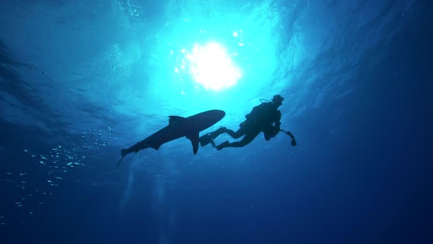 Scuba diver and shark in backlight   Shutterstock HD Video #30552778