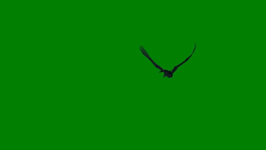 Black Ravens - Flying Flock - Green Screen - 4K Loop