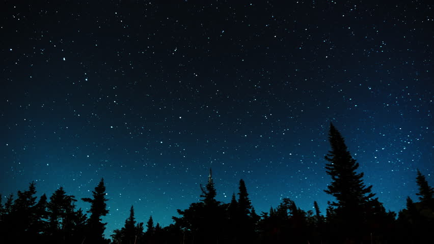 Stars in the night sky against the backdrop of silhouettes of trees.4K time-lapse