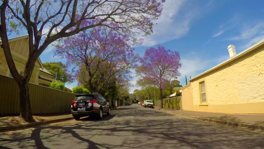 Jacaranda purple flowering tree lined streets of springtime Adelaide, South Australia, vehicle POV, driving along Macklin Street, Hyde Park, 4k real time.