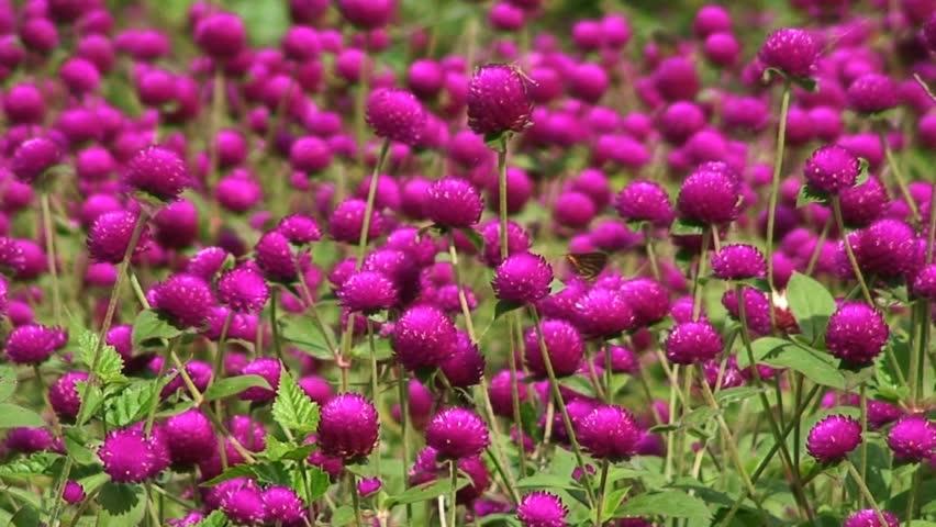 Many small round flowers 100 30808 many small round flowers 100 30808 shutterstock mightylinksfo