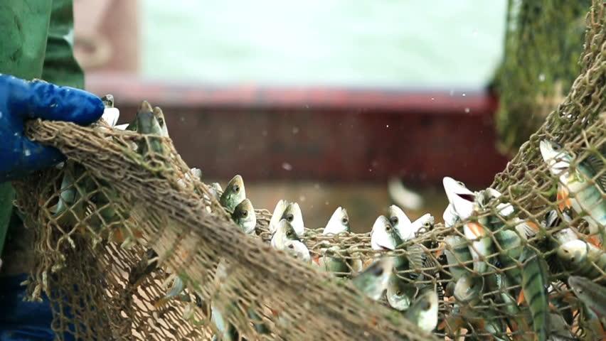Fishermen catching fish nets