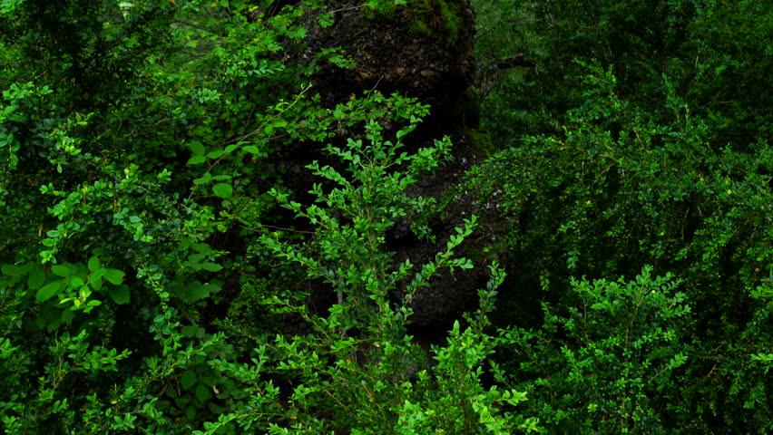 Portuguese Oak, Escuain Gorge, Ordesa y Monte Perdido National Park, Huesca, Spain, Europe | Shutterstock HD Video #30923902