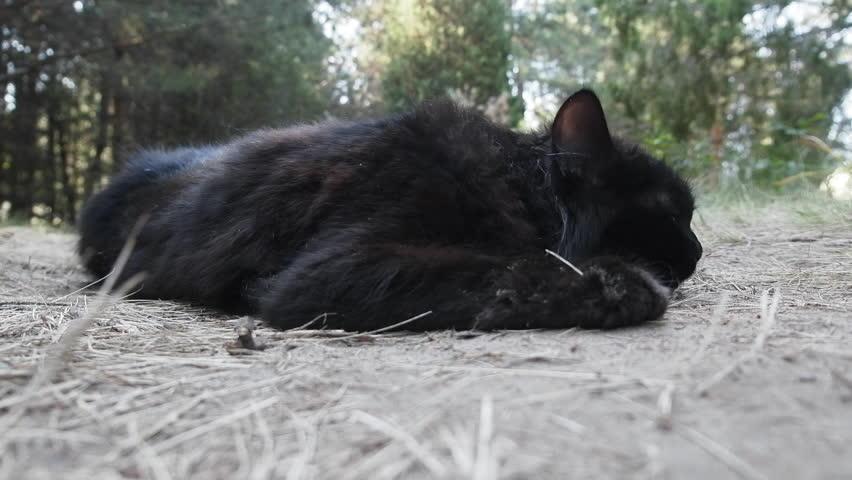 vakker svart pussie Internett blowjob