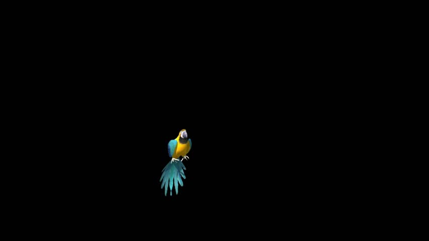 Parrot Flies Alpha Matte 3D Rendering Animation Animals