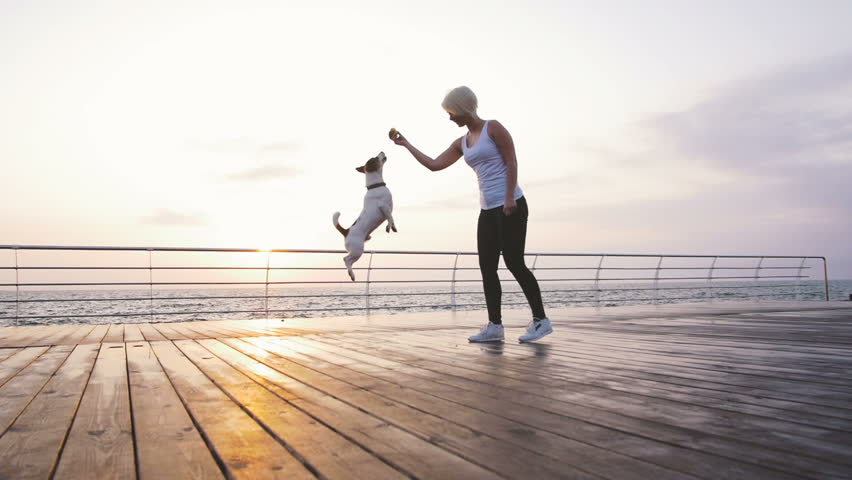 Young woman training cute dog Jack Russel near the sea, slow motion #31015498