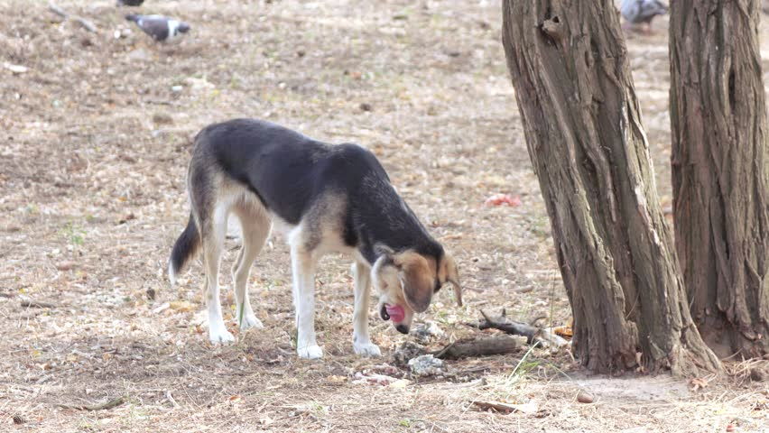 In a city park a stray dog eats food - 4K stock footage clip